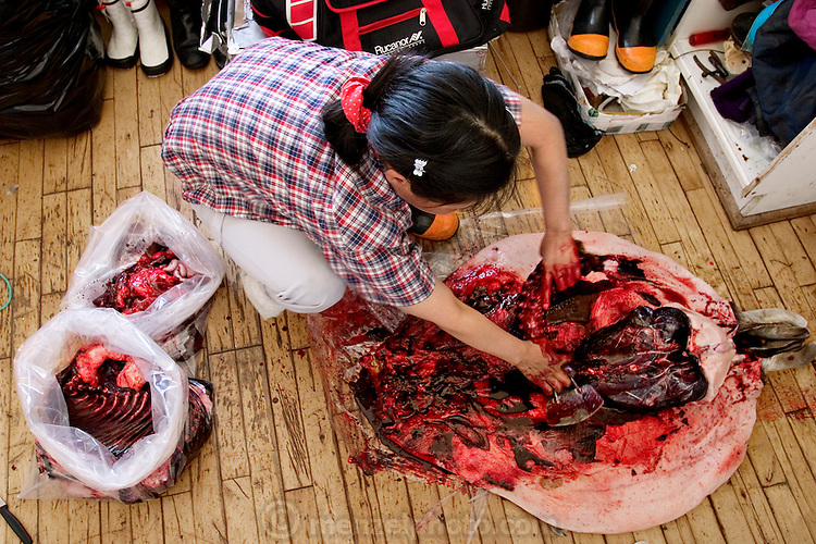 Erika Madsen, the seal hunter Emil Madsen's wife, begins with a long incision to clean the seal her husband shot in Cap Hope village, Greenland. (From the book What I Eat: Around the World in 80 Diets.) After cleaning the seal, she will cook the best meat for her family, feed the remains to the sled dogs, then dry and sell the sealskin. Seal meat continues to be an important source of meat for some Greenlanders, but for many, Danish food has replaced the indigenous diet.