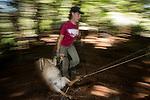 Mountain Lion (Puma concolor) biologist, Justine Smith, dragging road-killed Black-tailed Deer (Odocoileus hemionus) to bait lions, Santa Cruz Puma Project, Santa Cruz Mountains, California