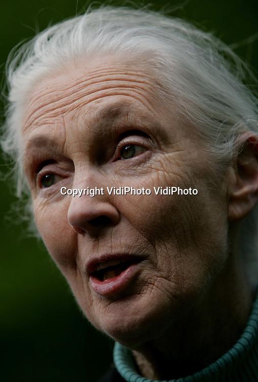 Foto: VidiPhoto..ARNHEM - De internationaal bekende mensapendeskundige dr. Jane Goodall (75) uit Engeland, heeft vrijdagmiddag en -avond een bezoek gebracht aan Burgers' Zoo in Arnhem. Dr. Goodall kreeg internationale bekendheid vanwege baanbrekende ontdekkingen bij chimpanseepopulaties in de oerwouden van Tanzania. Burgers' Zoo heeft een wereldberoemde chimpanseekolonie, waaraan internationaal het meeste gedragsonderzoek is verricht.