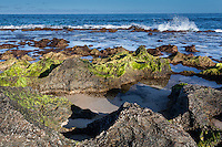 Jagged rocks covered with green algae at low tide near the shoreline at Ke Iki Beach, North Shore, O'ahu.