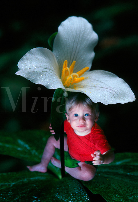 Flower baby sitting on Trillium leaves with a flower as an umbrella.