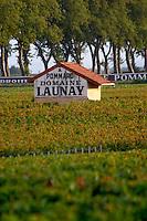 Vineyard. Domaine Launay. Pommard, Cote de Beaune, d'Or, Burgundy, France