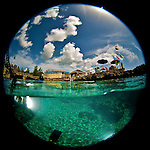 8 August 2010: Surfacing from a SCUBA Dive in front of the Macabuca Tiki Bar and Grill, adjacent the Cracked Conch Restaurant ,at Turtle Reef on Grand Cayman Island in the British West Indies. The Cayman Islands are renowned for their excellent scuba diving. Model Release on File. Mandatory Credit: Ed Wolfstein Photo