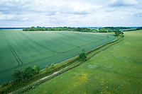Aerial view of winter wheat field and public bridleway - Cambridgeshire, May