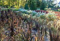 France, Indre-et-Loire (37), Chenonceaux, château et jardins de Chenonceau, le potager, potager des fleurs avec d'avant en arrière, ???, Liatris, Stippa tenuissima, Euphorbia characias, Sedum spectabile