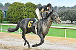 HOT SPRINGS, AR - FEBRUARY 19: Sonneteer with jockey Kent Desormeaux cooling down after  the Razorback Handicap at Oaklawn Park on February 19, 2018 in Hot Springs, Arkansas. (Photo by Ted McClenning/Eclipse Sportswire/Getty Images)