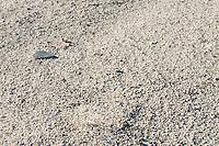 Crust of the Mojave Desert, California.