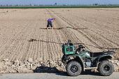 Worker shoveling a crop field. Fresno County, San Joaquin Valley, California, USA