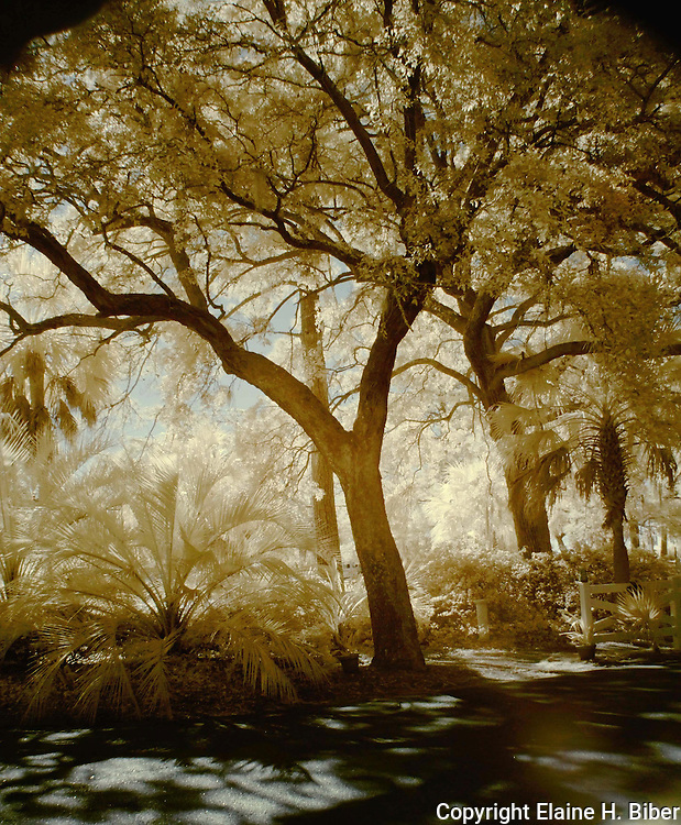 Infrared Lowcountry morning