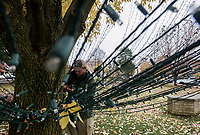 NWA Democrat-Gazette/CHARLIE KAIJO Bentonville Parks and Recreation employee Kyle Dixon tapes lights, Monday, November 5, 2018 at the downtown square in Bentonville.<br /><br />City employees from the Bentonville Parks and Recreation department are installing 22 miles of lights along the large trees and ground at the square, in front of the Benton County court house and Lawrence Plaza. Workers expect to finish the installation next week.