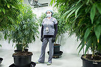 """Brooke Charron is Director of Human Resources at Garden Remedies, a medical cannabis producer, at the Garden Remedies growing and production facility in Fitchburg, Massachusetts, USA, on Fri., Feb. 22, 2019. She is seen here among the """"mother"""" plants from which cuttings are taken to make clone plants for growing."""