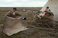Bovanenkovo ,Yamal Peninsula, Russia, 09/07/2010..The Nenets, indigenous nomadic reindeer herders, prepare to leave their overnight camp on sledges heading north to the Russian Arctic coast.