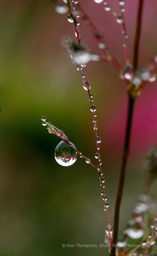 Dewdrops on the Schulenberg Prairie, The Morton Arboretum