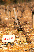Syrah vine and sign at La Truffe de Ventoux truffle farm, Vaucluse, Rhone, Provence, France