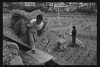 Bouyei villagers collect haystacks from the fields at Guanling Bouyei and Miao Autonomous County in Guizhou Province, 2018.