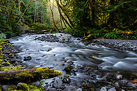 Barnes Creek, Olympic National Park, Washingon