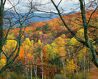 Autumn color on Rowe Hill, Vermont
