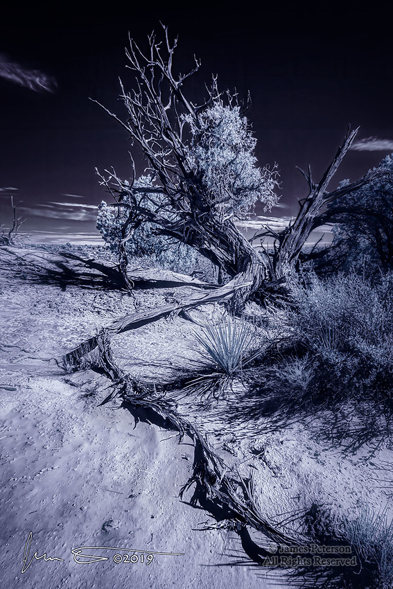 Rooted: Juniper in Utah Desert (Infrared).  This intrepid tree, which appears to be nearing the end of its life, has endured harsh desert conditions for many decades.  Its stark-but-graceful form, however, will likely endure upon the landscape long after its passing<br />  <br /> Image ©2019 James D. Peterson