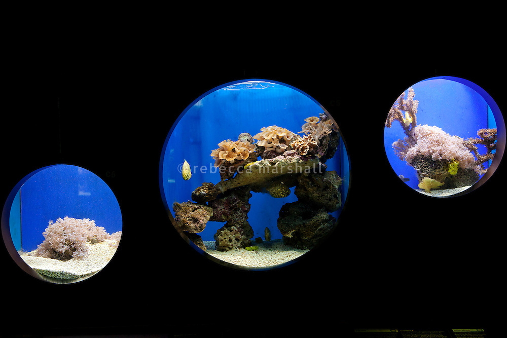 Tropical aquariums displaying inecone fish, saddled toby and leaf scorpionfish at the Musée Océanographique, Monaco, 5 July 2013.