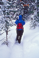 A winter hiker follows a trail through thick evergreens in Pictured Rocks National Lakeshore near Munising, Mich.