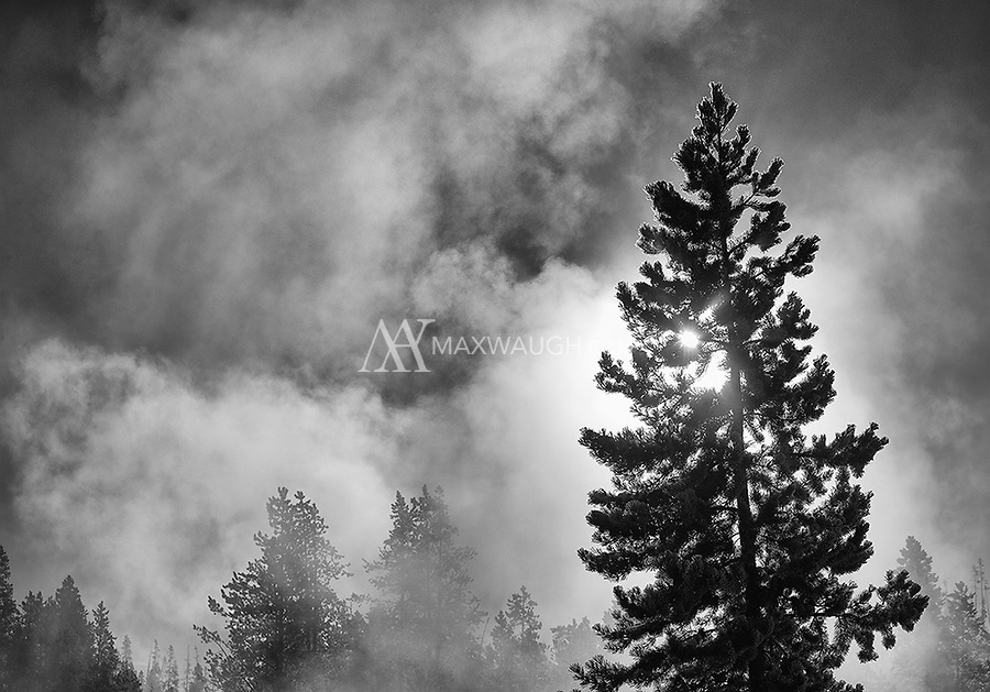 Yellowstone's steamy thermal areas create quite an atmosphere in winter.