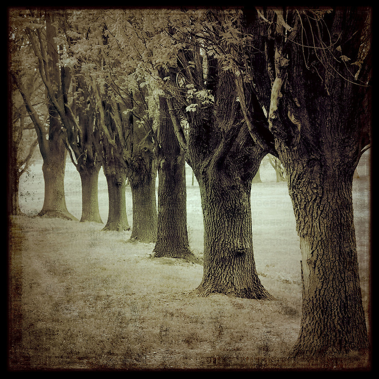 Od trees in a row