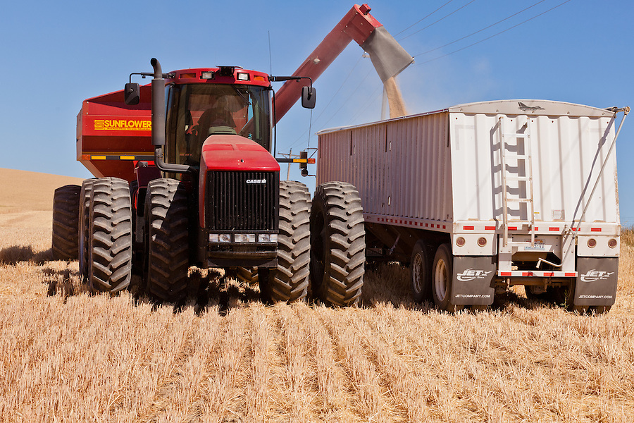 A Case 335 tractor unloads raw wheat kernels from the Sunflower grain trailer into a Freightliner truck.