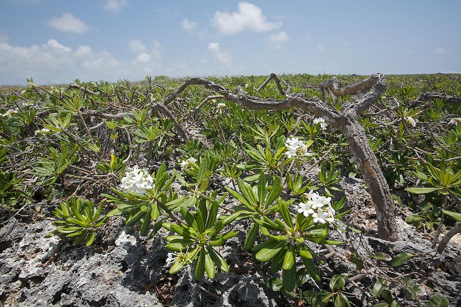 Diente de perro (dog teeth) coral rocks peninsula de Guanahacabibes (western point of Cuba).
