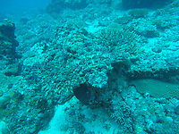 Africa, Madagascar, Nosy Be, Nosy Be Island. Fish, Scuba diving underwater, Mozambique Channel.