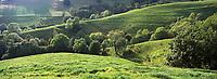 Europe/France/Auvergne/15/Cantal/Parc Naturel Régional des Volcans/Massif du Puy Mary (1787 mètres): Paturages de la vallée de Mandailles