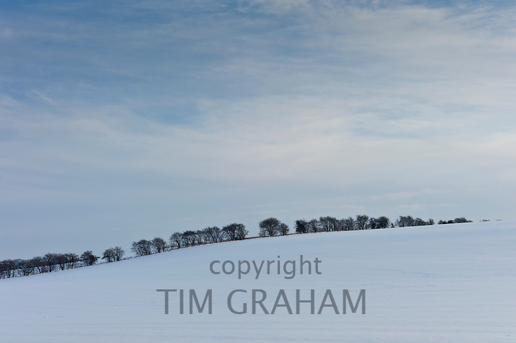 Row of trees in winter landscape in Swinbrook, The Cotswolds, UK