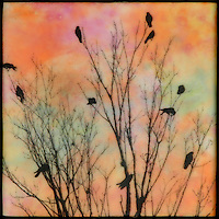 Encaustic painting with photo transfer of birds in branches in pink and orange sunset sky