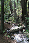Creek in redwoods in Big Sur