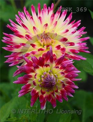 Gisela, FLOWERS, photos(DTGK369,#F#) Blumen, flores, retrato