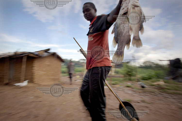 A young fisherman holds Tilapia on his way back to his village on an island on Lake Victoria near Kampala.