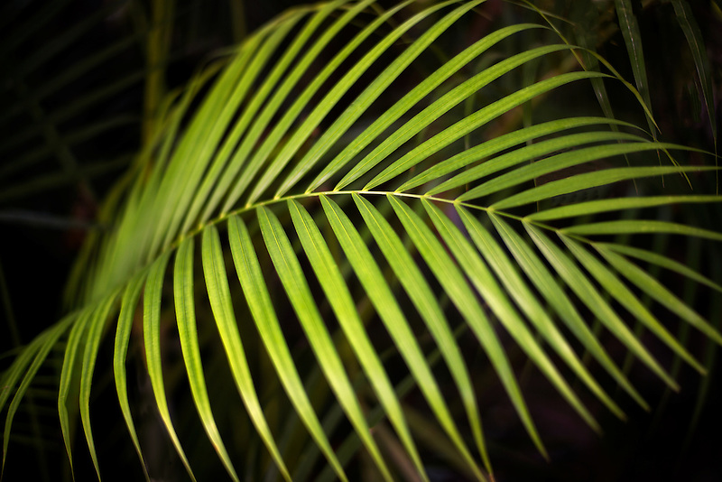 Close up of tropical plant. Mexico