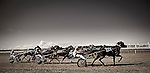 Hawera Easter Races