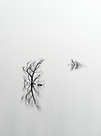 Abstract patterns in smoke from a prescribed burn near White Horse Lake in northern Arizona, USA