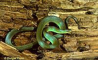 1R04-001a  Smooth Green Snake - Opheodrys vernalis