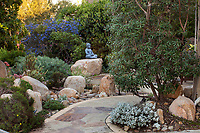 Comarostaphylis diversifolia, Summer Holly, evergreen shrub against wall by entry path into front garden patio in California native plant garden with Buddha statue contemplating; Vincent Garden