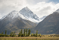 Farmland near Mount Cook village with fresh snow on Mount Burnett of Southern Alps in background, Aoraki Mount Cook National Park, UNESCO World Heritage Area, Mackenzie Country, South Island, New Zealand, NZ