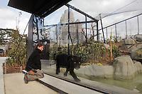 Carene Presles, soigneur animalier, surveille le déplacement d'Aramis, le Jaguar, dans son pleateau extérieur a travers la baie vitrée, point d'observation du public, premiere sortie de l'animal a la suite de son transfert depuis la Menagerie du Jardin des Plantes, new Parc Zoologique de Paris, or Zoo de Vincennes, (Zoological Gardens of Paris, also known as Vincennes Zoo), Museum National d'Histoire Naturelle (National Museum of Natural History), 12th arrondissement, Paris, France. Picture by Manuel Cohen