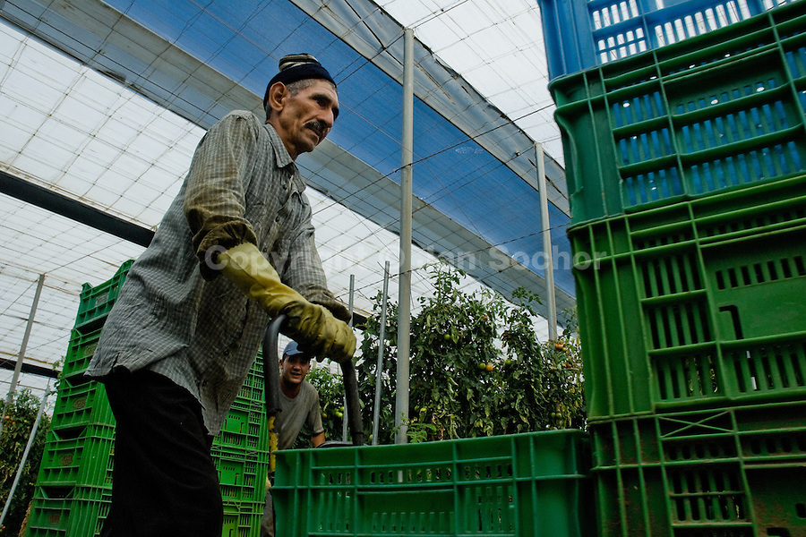 A Moroccan immigrant worker pushes a hand cart with empty boxes in the greenhouse in El Ejido, Spain, 22 May 2007. El Ejido, a dry region on the coast of Andalusia, has changed during the last decades into the centre of vegetable production not only for the Spanish market. A half of Europe is supplied by tomatoes, peppers and melons from El Ejido. This economic miracle is from a major part based on a cheap labor force of illegal immigrants from Maghreb and Subsaharian Africa. Tens of thousands of workers keep the plastic sea of greenhouses running for the minimum wage of 30 Euros a day.