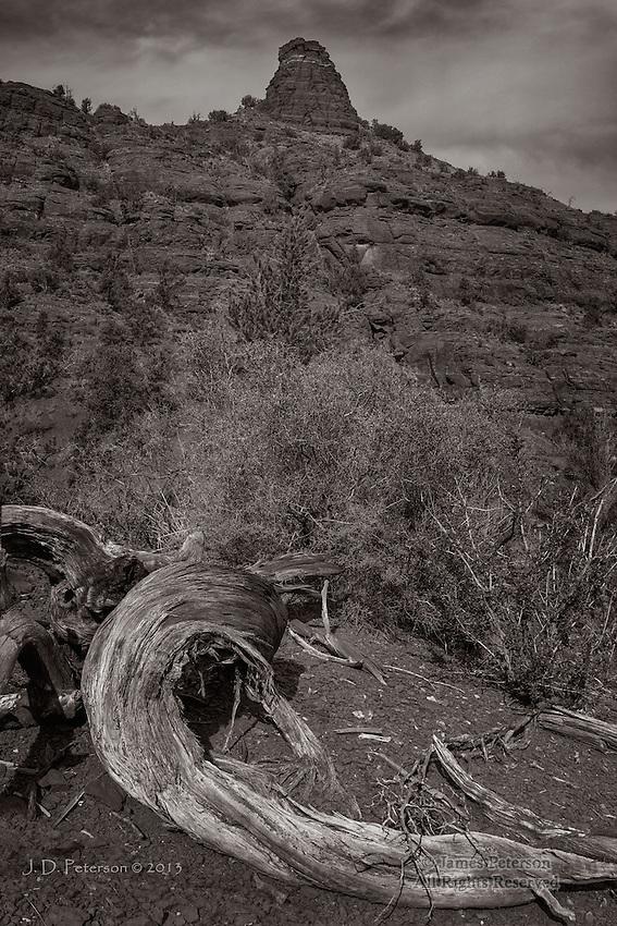 Juniper Trunk with Chimney Rock near Baldwin Trail, Arizona