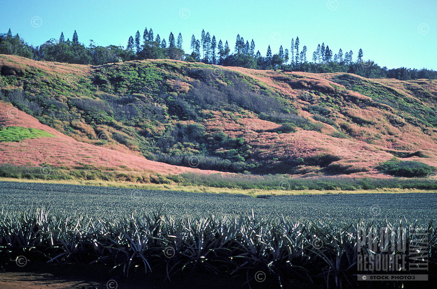 Pineapple field, Lanai