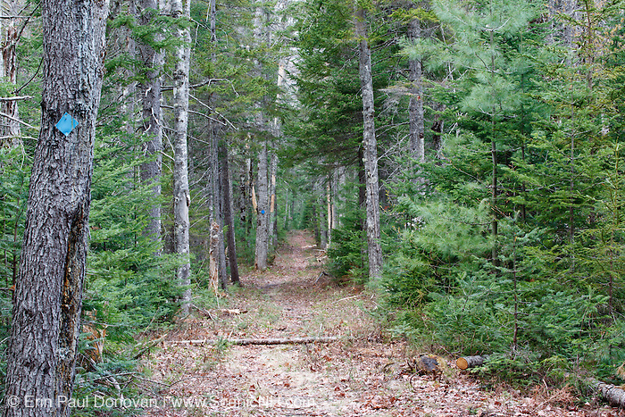 Nanamocomuck Ski Trail in the White Mountains, New Hampshire near the Swift River. This section of trail follows the old Bartlett and Albany Railroad, which was a logging railroad in operation from 1887 - 1894