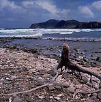 Driftwood on Caribbean beach, St Lucia, West Indies. circa 1975.