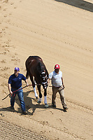 HOT SPRINGS, AR - April 14: Classic Empire walks onto the track after schooling in the infield at Oaklawn Park on April 14, 2017 in Hot Springs, AR. (Photo by Ciara Bowen/Eclipse Sportswire/Getty Images)