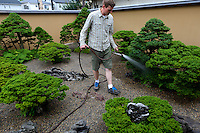 Adam Jones, a bonsai apprentice at the Mansei nursery watering plants. Bonsai-mura, Omiya, Saitama Prefecture, Japan, June 25, 2013. The Omiya Bonsai Village was founded in 1925 and is Japan's most famous production center for bonsai.