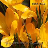 Gisela, FLOWERS, BLUMEN, FLORES, photos+++++,DTGK2015,#f#